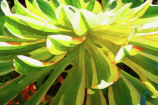 Sunburst Succulent On Blue Close Up by Amy Vangsgard