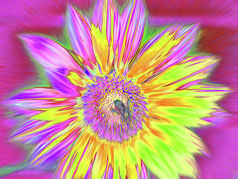 Sunbuzzy by Cris Fulton