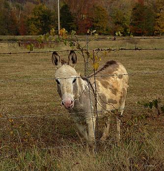 Alana  Schmitt - Sundae Donkey