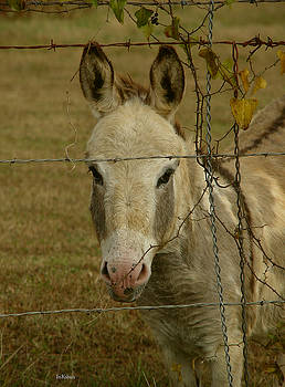 Alana  Schmitt - Sundae Donkey-headshot