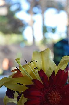Sunday Morning Patio Colors by John Glass
