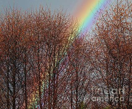 Sunday's Rainbow by Laura  Wong-Rose
