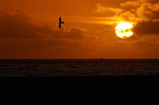Clayton Bruster - Sundown Flight