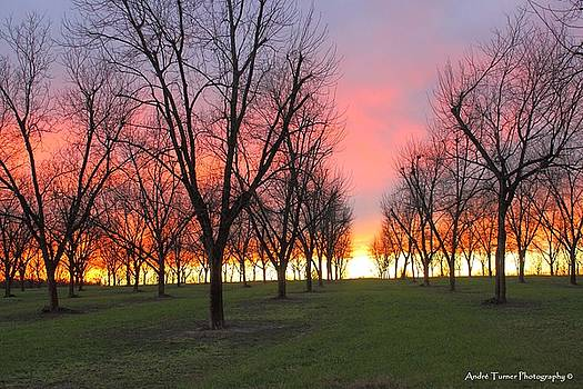 Sundown Pecan Orchard by Andre Turner