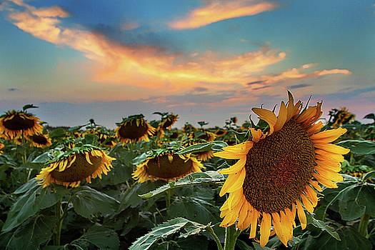 Sundown by Thomas Zimmerman