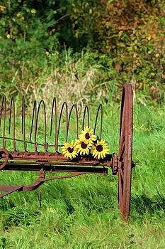 Sunflowers by Lee Fortier