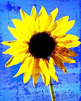 Marty Koch - Sunflower 12