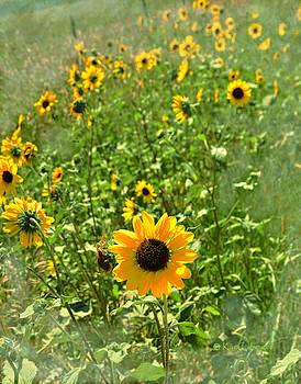Kae Cheatham - Sunflower 183