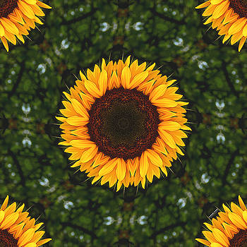 Sunflower 2160k8 by Brian Gryphon