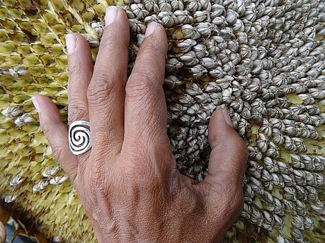 Beatrice Cox - Sunflower 3