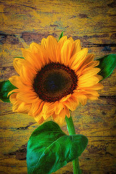 Sunflower Against Rustic Wall by Garry Gay
