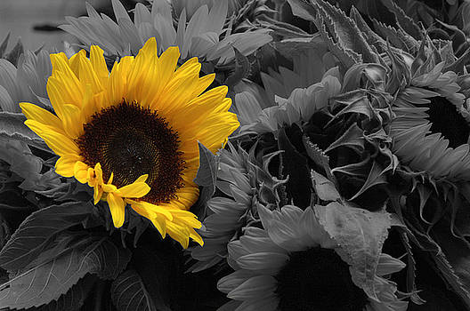 Sunflower by Al Junco