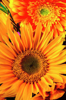 Sunflower And Daisy by Garry Gay