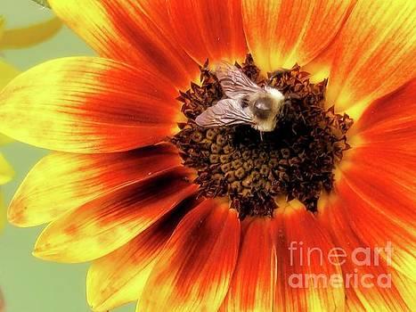 Sunflower and Friend by Putterhug Studio