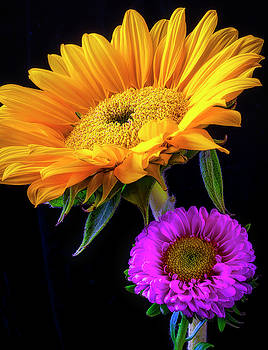 Sunflower And Matsumoto Flowers by Garry Gay