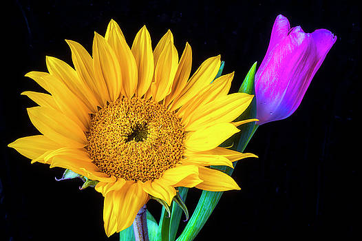 Sunflower And Pink Tulip by Garry Gay