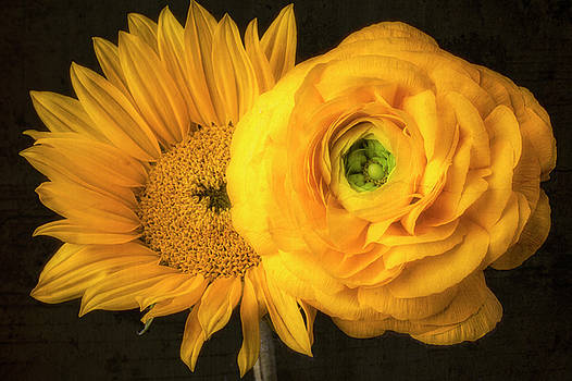 Sunflower And Ranunculus by Garry Gay