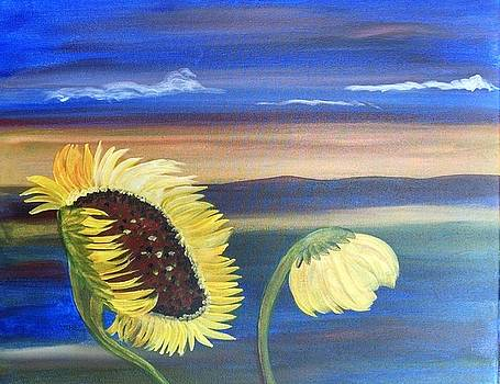 Sunflower and sunset by Barbara Unruh