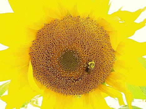 Sunflower and the Happy Bee by Lisa Gilliam