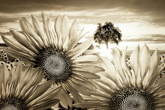 Debra and Dave Vanderlaan - Sunflower Angels