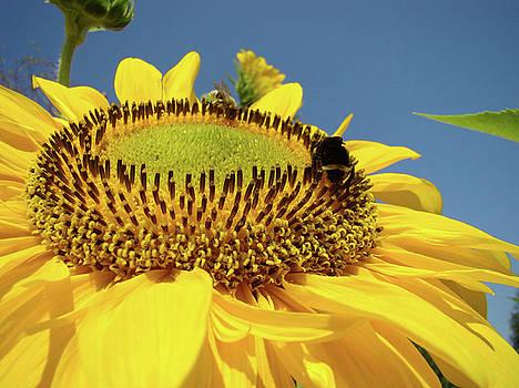 Baslee Troutman - SUNFLOWER Art Prints Honey Bee Sun Flower Floral Garden