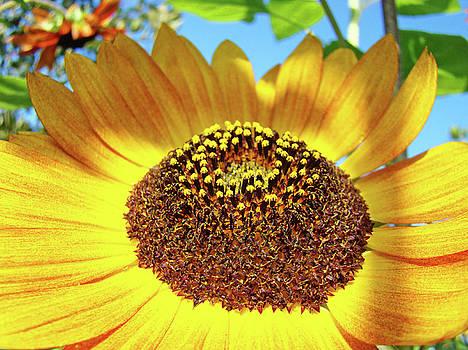 Baslee Troutman - Sunflower art prints Orange Yellow Floral Garden Baslee Troutman
