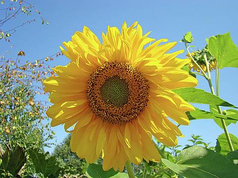 Baslee Troutman - SUNFLOWER Art Prints Sun Flower 2 Giclee Prints Baslee Troutman