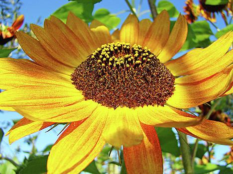 Baslee Troutman - SUNFLOWER Art Prints Sun Flowers Gilcee Prints Baslee Troutman