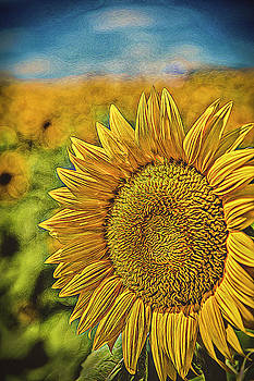 Sunflower at Grinter Farm by Roy Inman