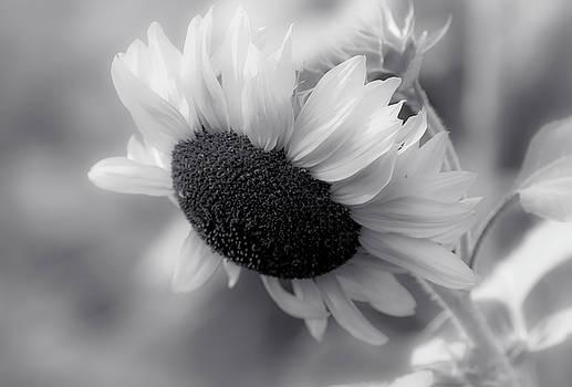 Sunflower Black And White by Athena Mckinzie