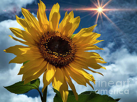 Sunflower Brilliance II by Al Bourassa