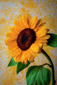 Sunflower By Adobe Wall by Garry Gay
