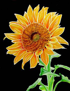 Sunflower by Carol Blackhurst