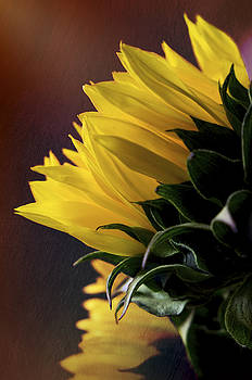 Sunflower by Christina Durity