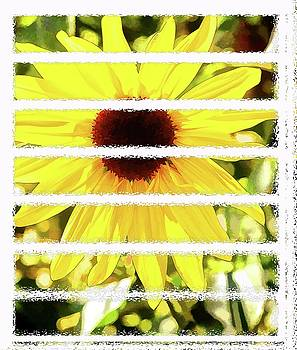 Sunflower Day by Image Takers Photography LLC - Carol Haddon and Laura Morgan