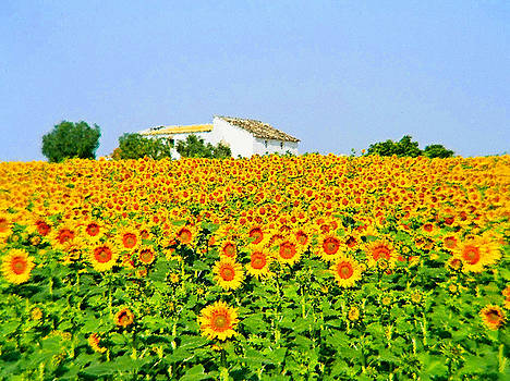 Sunflower Farm - Art by Josephine Benevento-Johnston