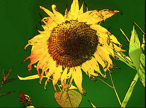 Sunflower Farm by Jennifer Cadence Spalding