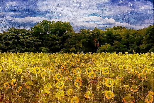 Sunflower Field by Scott Fracasso