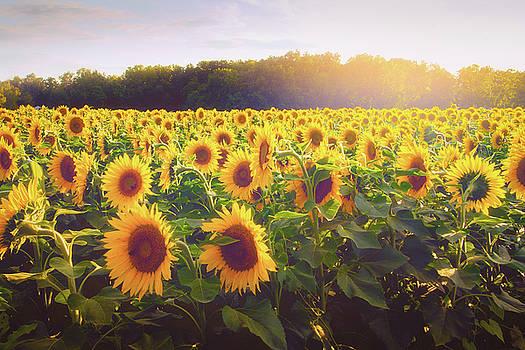 Sunflower Field by Victoria Winningham