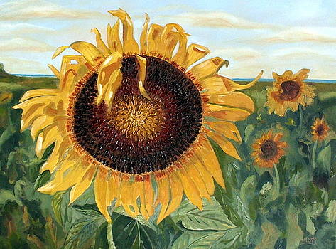 Sunflower Fields Forever  by Maria Soto Robbins