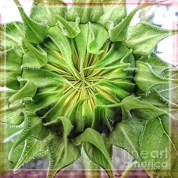 Sunflower - I see the Sun by Ella Kaye Dickey