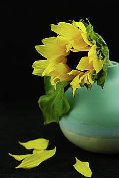 Sunflower in Blue Pottery by Nancy Kirkpatrick