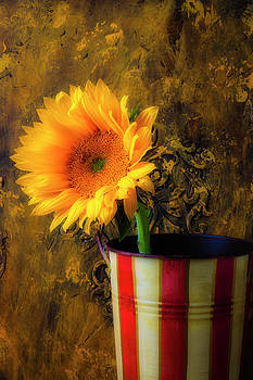 Sunflower In Tin Bucket by Garry Gay