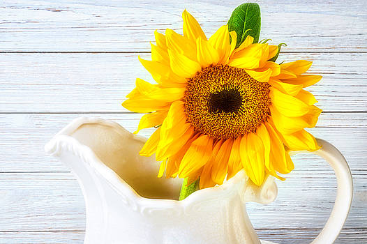 Sunflower In White Pitcher by Garry Gay