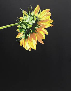 Sunflower by Jeffrey Bess