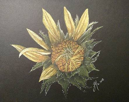 Sunflower by Joan Mansson