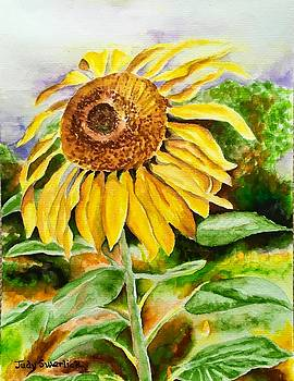 Sunflower by Judy Swerlick