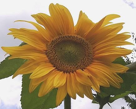 Sunflower by Julia Woodman