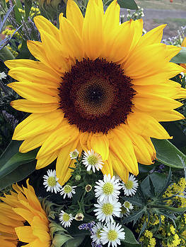 Sunflower by Kathleen Anderle