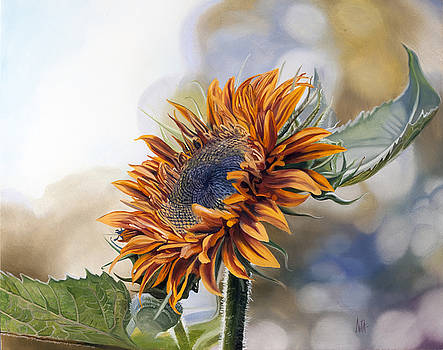 Sunflower by Kevin Aita